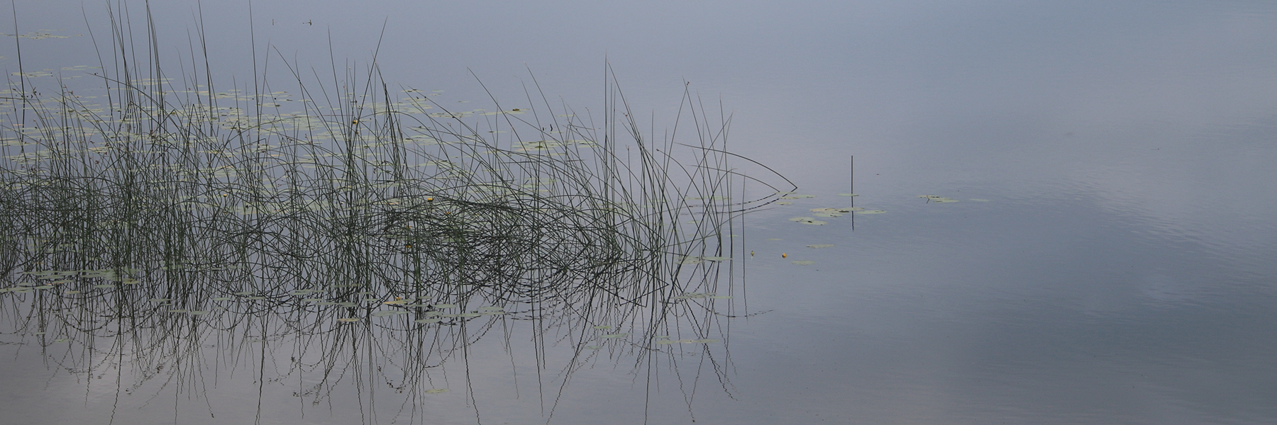 Reeds on a Lake
